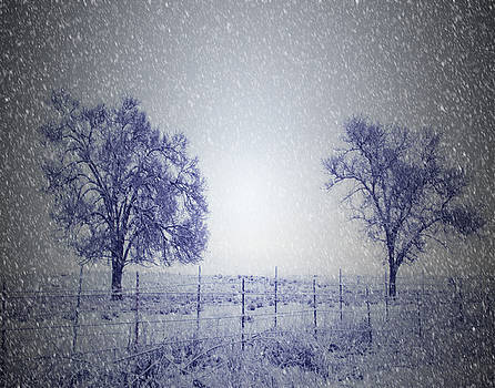 Two Trees in Winter by Nadine Berg