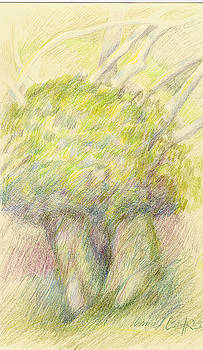 Two Trees by Irma   Ostroff