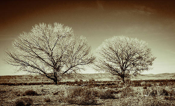 Two Trees by Randall Dunphy
