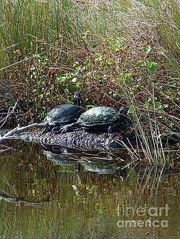 Cindy Treger - Two Turtles
