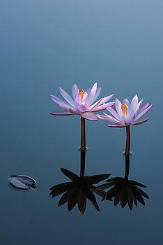 Two Water Lilies - Portrait by Dennis Kowalewski