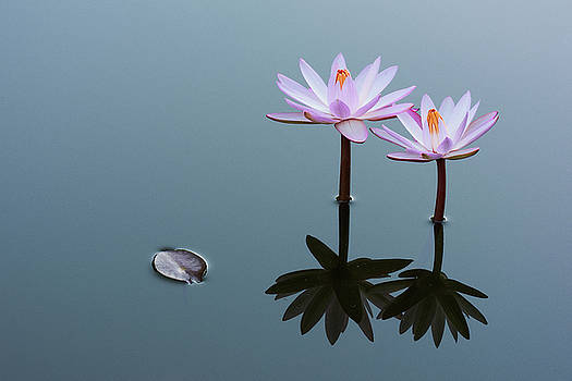 Two Water Lilies - Landscape by Dennis Kowalewski