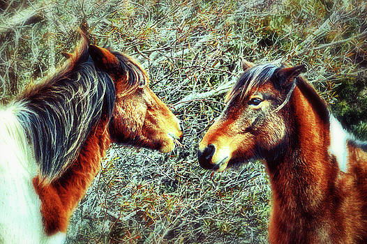 Two Wild Ponies of Assateague Island in Classic Film Style by Bill Swartwout Fine Art Photography