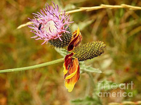 Two Wild Wallflowers by Ella Kaye Dickey
