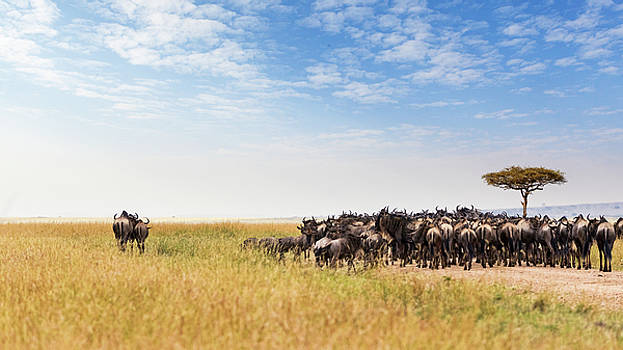 Two Wildebeest Standing Out From Crowd by Susan Schmitz