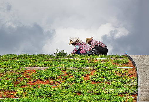Two Workers Busy with Landscaping by Yali Shi