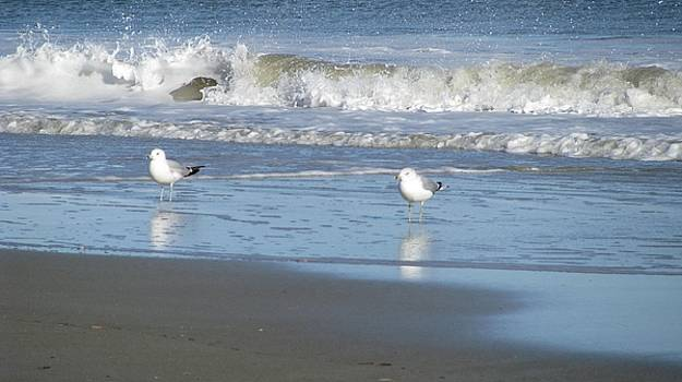 Tybee Birds by Amy Fitzsimmons