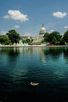 Allen Sheffield - U S Capitol with a Duck