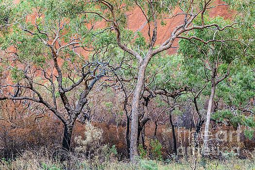 Uluru 05 by Werner Padarin
