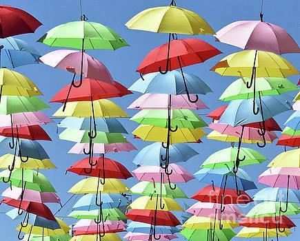 Umbrella Delight 2 by Lydia Holly