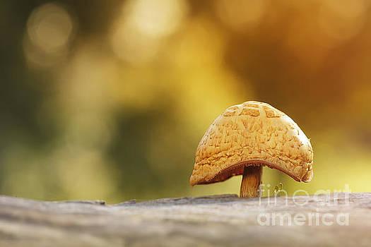 Umbrella by Ines Leonardo
