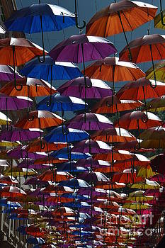 Umbrellas by Andy Thompson