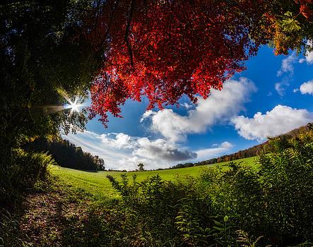 Chris Bordeleau - Under a Red Autumn Maple