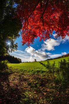 Chris Bordeleau - Under a Red Autumn Maple - Vertical