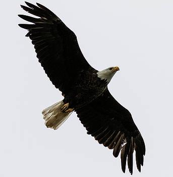 Gloria Anderson - Under a soaring eagle