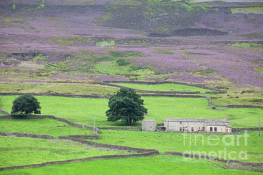 Under Harkerside Moor by Gavin Dronfield