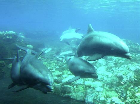 Douglas Martin - Under SeaWorld 2