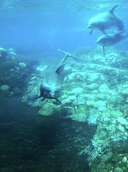Douglas Martin - Under SeaWorld