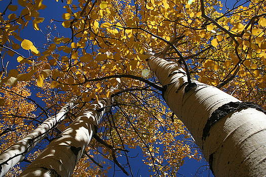 Under the Aspens by Leslie Sims