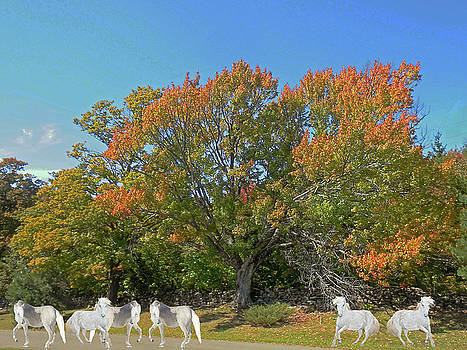 Under The Autumn Maple Tree by Patricia Keller