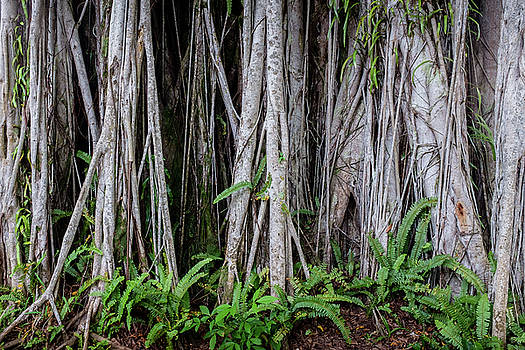 Under the banyan tree by Artisanal Photo