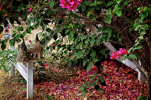 Under the bougainvillea by Camille Lopez