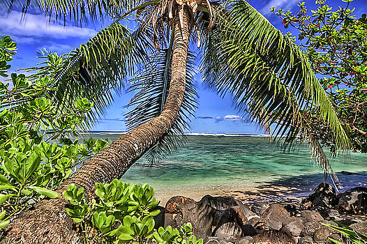 Under The Coconut Tree by Brad Granger