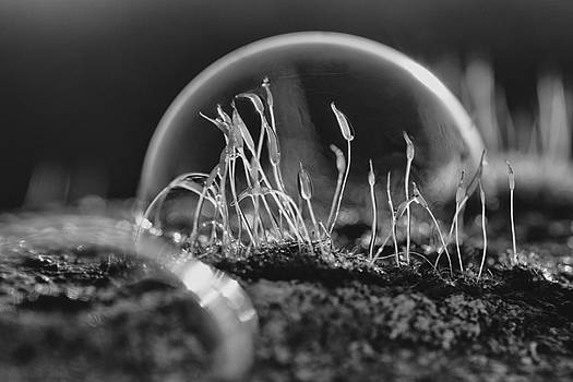 Under the dome Black and white by Baptiste De Izarra