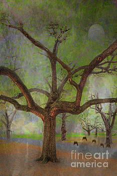 Larry Braun - Under the LIve Oak
