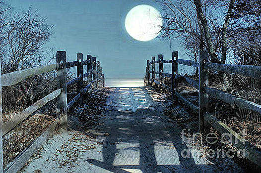 Under The Moonbeams by Judy Palkimas