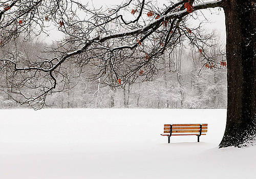 Under the Oak by Kelly Lucero