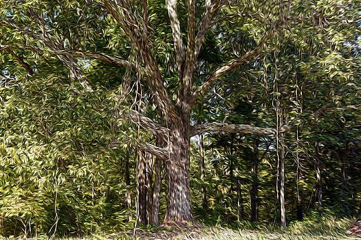 Under the Old Oak Tree by Wanda Brandon