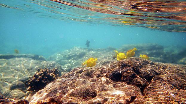 Under the Sea by Karen Nicholson