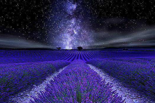 Under the Stars by Jorge Maia