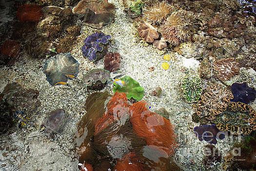 Under Water Life by Carol Lynn Coronios
