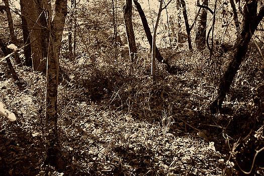 Nina Fosdick - underbrush