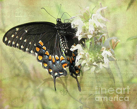 Underside of a Black Swallow Butterfly by TN Fairey