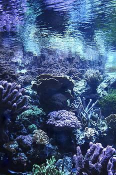 Underwater by Dan Holm