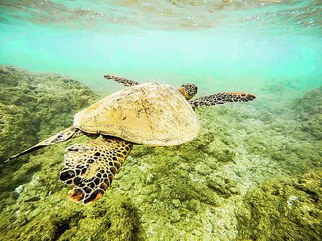 Underwater Flight by Peter Irwindale
