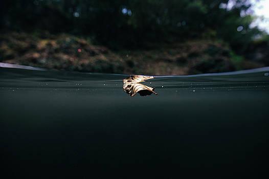 Underwater Leaf by Gemma Silvestre