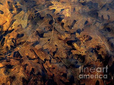Underwater Leaves by Robert Ball