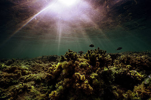 Underwater Sunset by Gemma Silvestre
