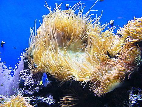Underwater Wonder by Stacy Frank