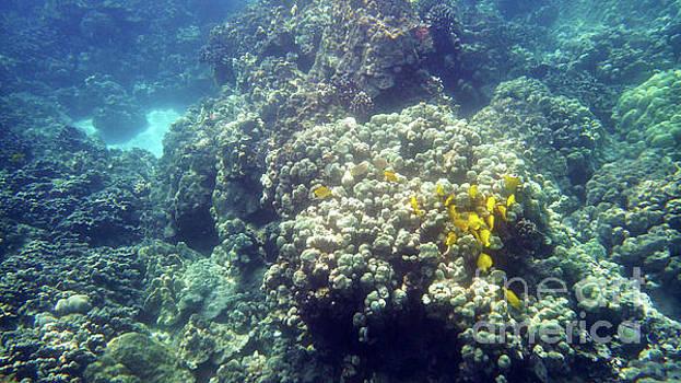Underwater World 2 by Karen Nicholson