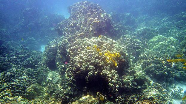 Underwater World by Karen Nicholson