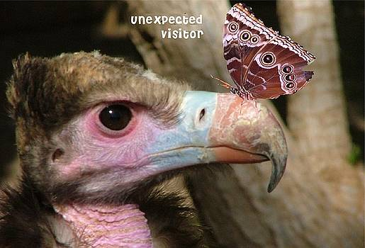 Unexpected visitor by Fun Cards