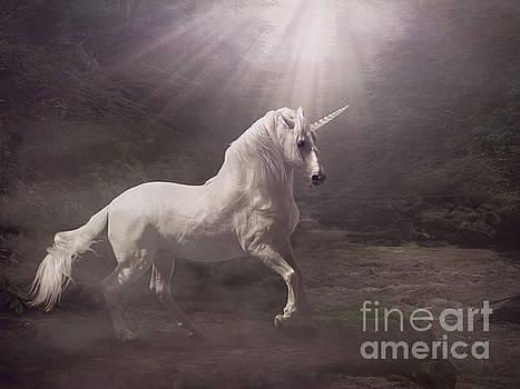 Unicorn by Babette Van den Berg