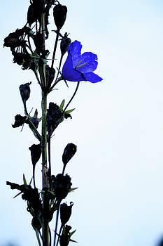 Unique Flower by Teemu Tretjakov