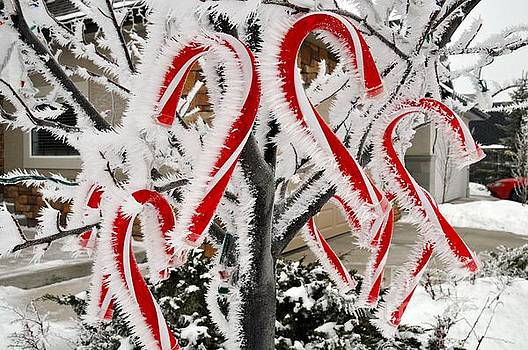 Unique formation of icicles and snow on decorative Led lights Candy canes  by Akshay Thaker-PhotOvation