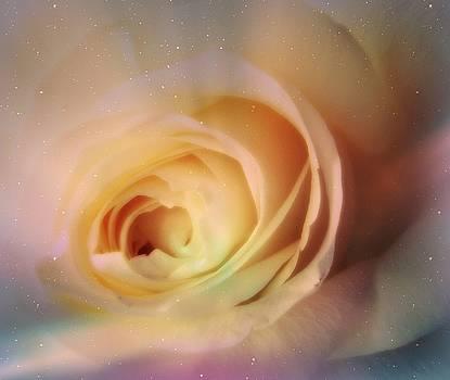 Universal Rose by Kristine Nora